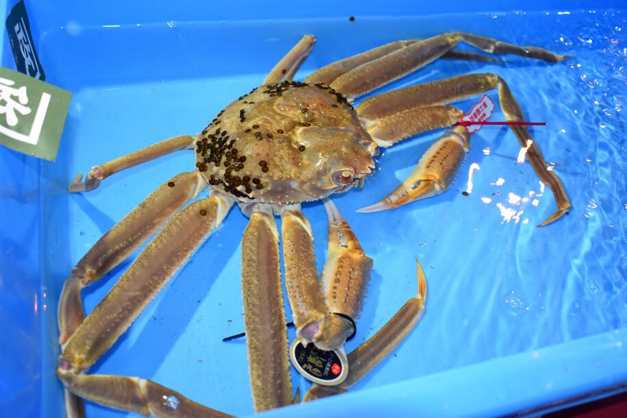 snow crab mahal