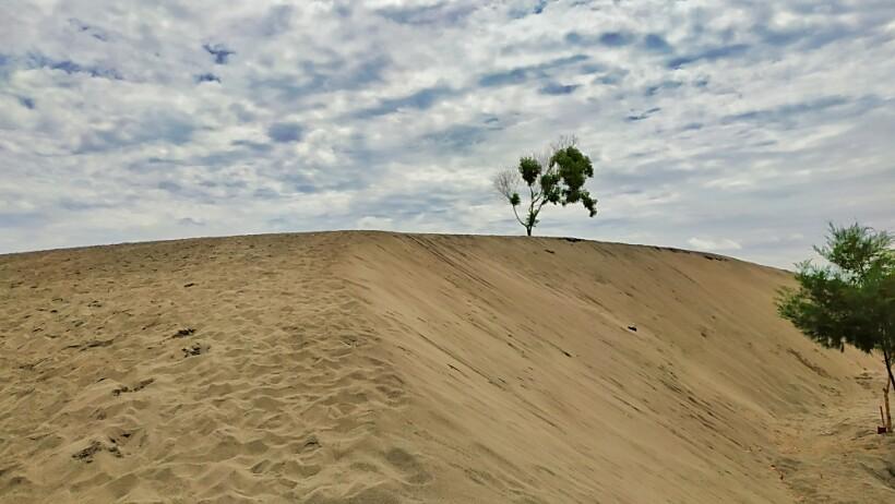 Gumuk Pasir Parangkusumo Wisata A La Gurun Sahara Di Yogyakarta Brisik